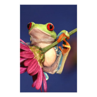 red eyed tree frog personalised stationery