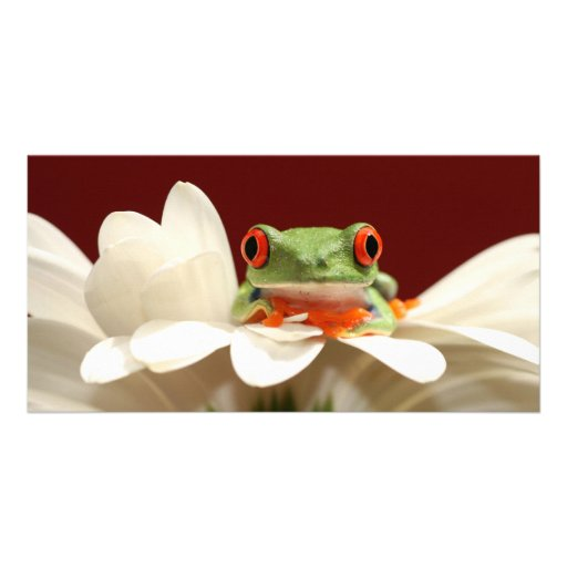 red eyed tree frog photo card template