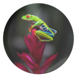 Red-eyed Tree Frog Plates