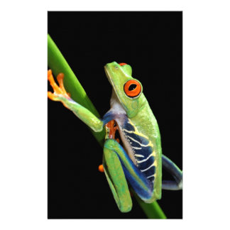 red eyed tree frog stationery design