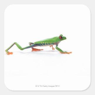 Red eyed tree frog walking sticker