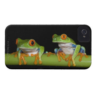 Red-eyed Tree Frogs (Agalychnis callidryas) iPhone 4 Case-Mate Case