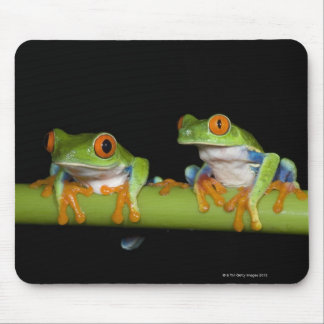 Red-eyed Tree Frogs (Agalychnis callidryas) Mouse Mat