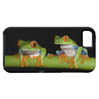 Red-eyed Tree Frogs (Agalychnis callidryas) on iPhone 5 Cover