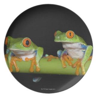 Red-eyed Tree Frogs (Agalychnis callidryas) on Plate