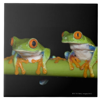 Red-eyed Tree Frogs (Agalychnis callidryas) Tile