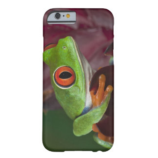 Red-eyed treefrog barely there iPhone 6 case