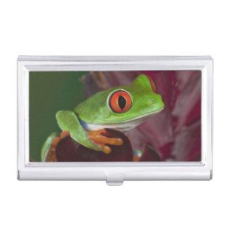 Red-eyed treefrog business card holder