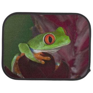 Red-eyed treefrog car mat