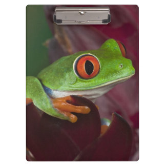 Red-eyed treefrog clipboard