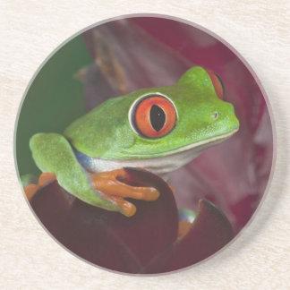 Red-eyed treefrog coaster