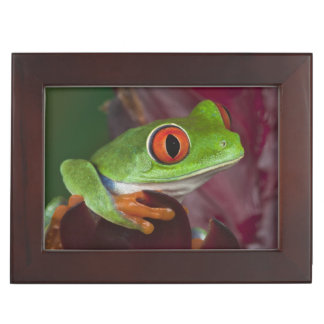Red-eyed treefrog keepsake box
