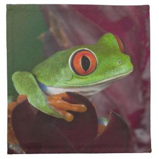 Red-eyed treefrog napkin