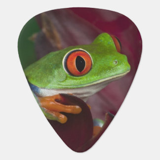 Red-eyed treefrog plectrum