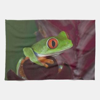 Red-eyed treefrog tea towel