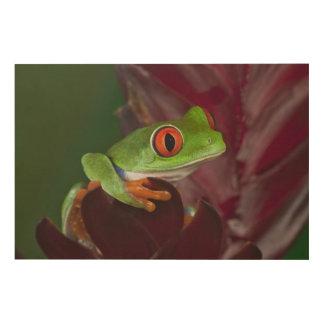 Red-eyed treefrog wood wall decor