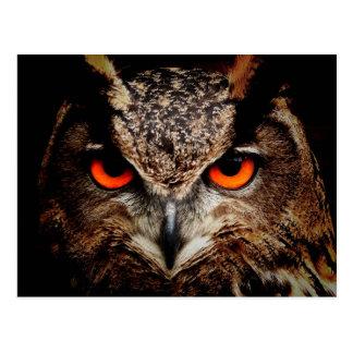 Red Eyes Eagle Owl Postcard