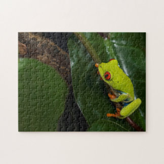 Red Eyes Frog On Stem Jigsaw Puzzle