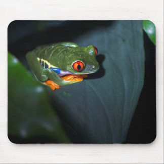 Red Eyes Frog Sitting Mouse Mat