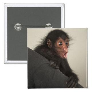 Red-faced Spider Monkey Ateles paniscus) 15 Cm Square Badge
