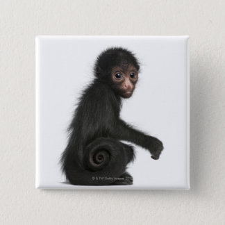 Red-faced Spider Monkey - Ateles paniscus (3 15 Cm Square Badge