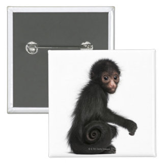 Red-faced Spider Monkey - Ateles paniscus (3 15 Cm Square Badge