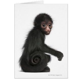 Red-faced Spider Monkey - Ateles paniscus (3 Card