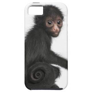 Red-faced Spider Monkey - Ateles paniscus (3 iPhone 5 Case