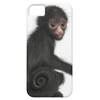 Red-faced Spider Monkey - Ateles paniscus (3 iPhone 5 Cover