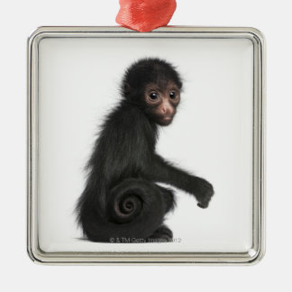Red-faced Spider Monkey - Ateles paniscus (3 Silver-Colored Square Decoration