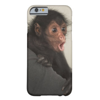 Red-faced Spider Monkey Ateles paniscus) Barely There iPhone 6 Case