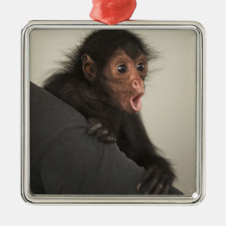 Red-faced Spider Monkey Ateles paniscus) Christmas Ornament
