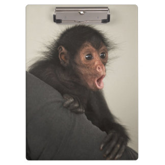 Red-faced Spider Monkey Ateles paniscus) Clipboard