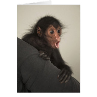 Red-faced Spider Monkey Ateles paniscus) Greeting Card