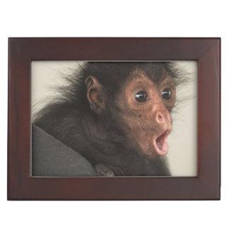 Red-faced Spider Monkey Ateles paniscus) Keepsake Box