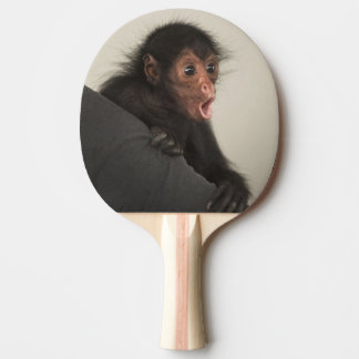 Red-faced Spider Monkey Ateles paniscus) Ping Pong Paddle