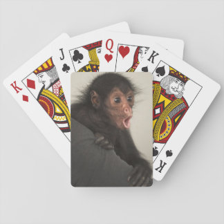 Red-faced Spider Monkey Ateles paniscus) Playing Cards