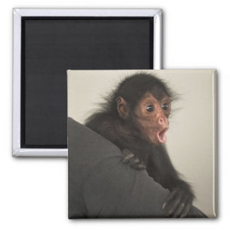 Red-faced Spider Monkey Ateles paniscus) Square Magnet