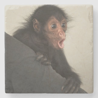 Red-faced Spider Monkey Ateles paniscus) Stone Coaster