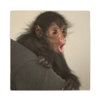 Red-faced Spider Monkey Ateles paniscus) Wood Coaster