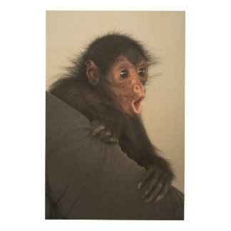 Red-faced Spider Monkey Ateles paniscus) Wood Print
