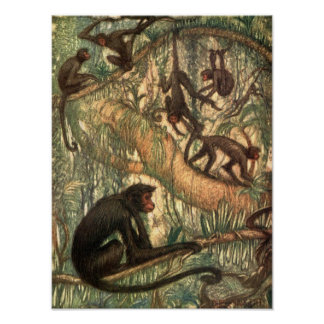 Red Faced Spider Monkeys by Louis Sargent Poster