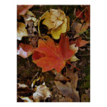 Red Fall Leaf Poster