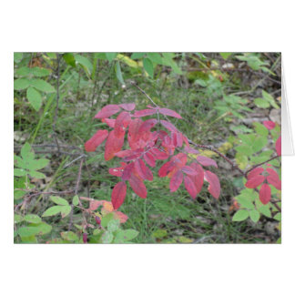 Red Fall Leaves Card