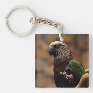 Red Fan Parrot Key Ring
