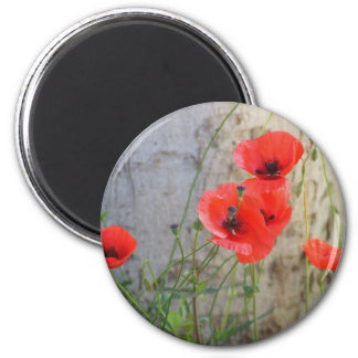 Red Field Corn Poppies Magnet