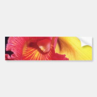 Red Fiery Orchid flowers Bumper Sticker