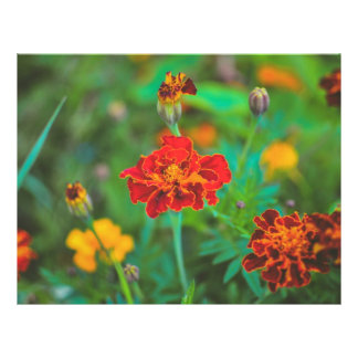 Red flower flyer design