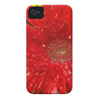 Red Flower in the Morning Mist Case-Mate iPhone 4 Cases
