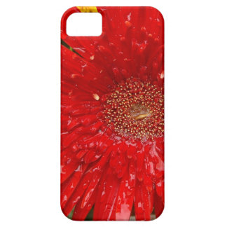 Red Flower in the Morning Mist iPhone 5 Covers